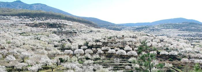 La Vallée de Jerte, entre les 5 meilleures routes en voiture d'Espagne