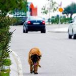 ¿Adelantar a un perro? ¡200 euros de multa!