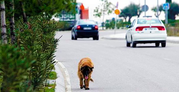 Multan a un conductor por adelantar a un perro
