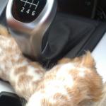 ¿Está prohibido dejar al perro solo dentro del coche?