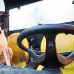 Caos en la autopista por un perro conduciendo un tractor