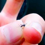 ¡Alto! Control de… ¡Mosquitos tigre!