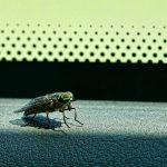 Un insecto en el coche… ¡que no cunda el pánico!